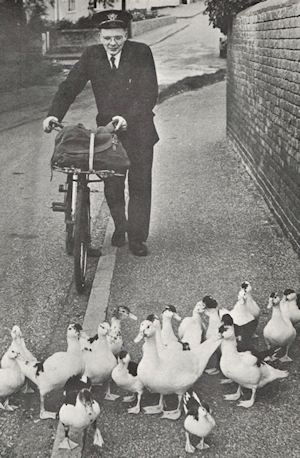 Singing Postman with Ducks